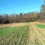 Cover crops establishment November