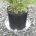 container grown plant sitting on plastic tray