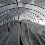 Greenhouse with plants covered with white cloth