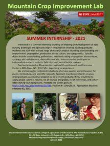 Summer internship flyer